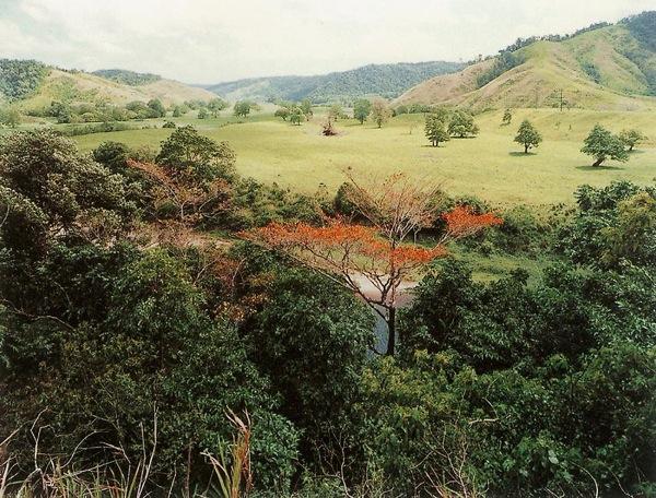 DAINTREE, AUSTRALIA, 1999.jpg