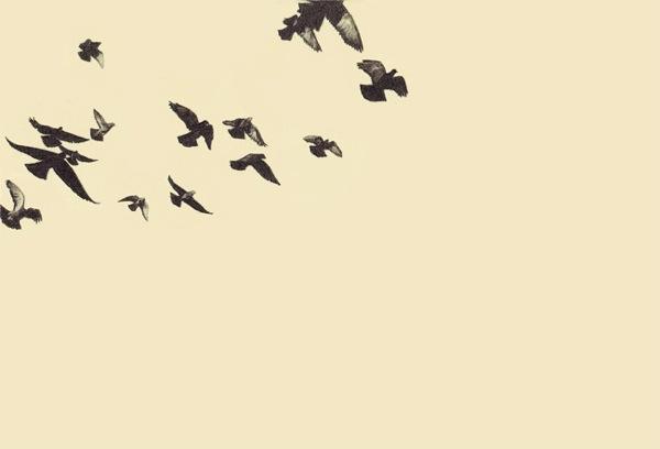 17_pigeons.jpg