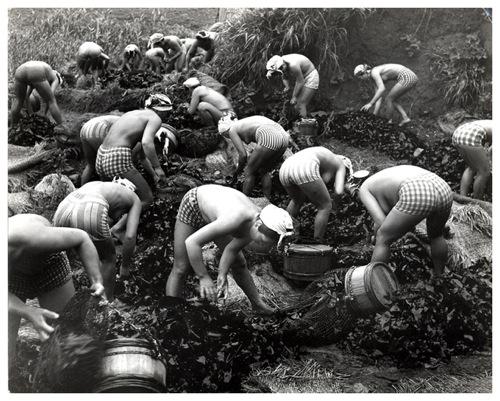 2.14 Konbu Harvest 45 x 55.jpg