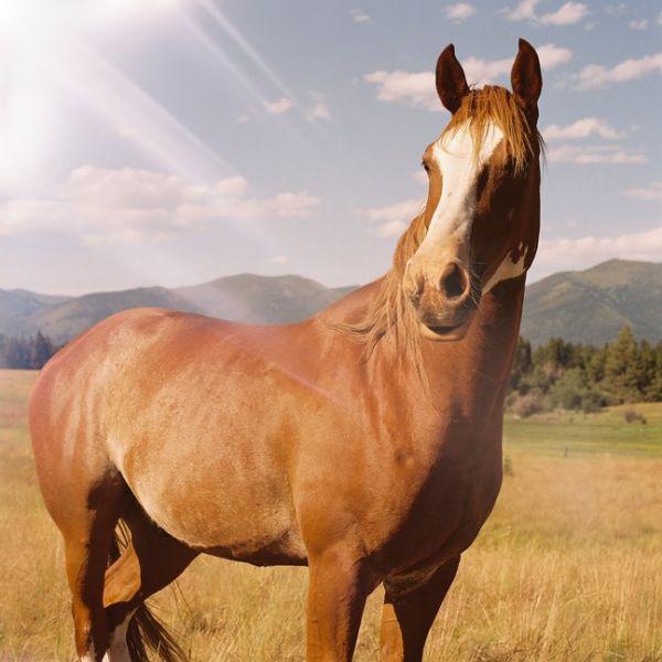 Brave horse 600x0