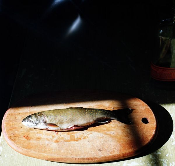 First darn trout 600x0