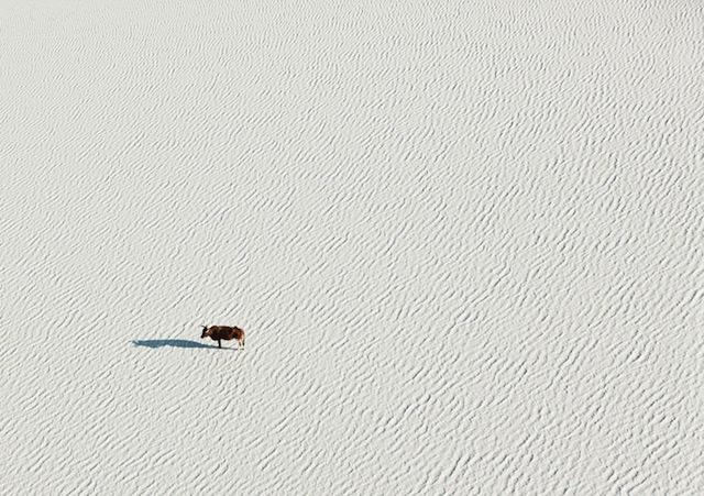 3-Zack-Seckler-Botswana-Robin-Rice-Gallery-yatzer