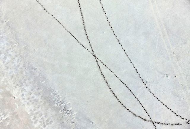 9-Zack-Seckler-Botswana-Robin-Rice-Gallery-yatzer