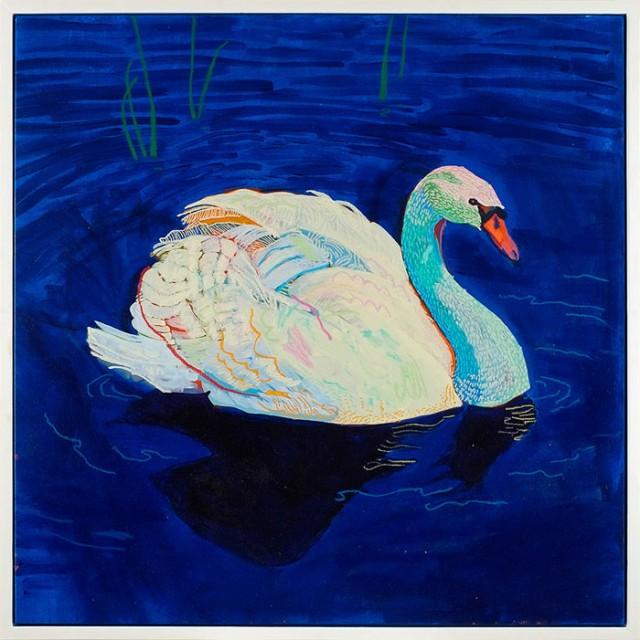 AndyDixon-Swan